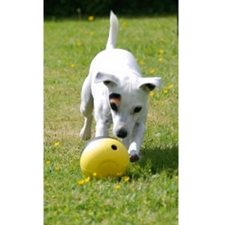Dog Dizzy Aktivitetskula